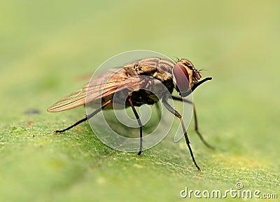 Fly predator