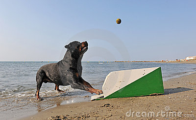 Flyball on the beach