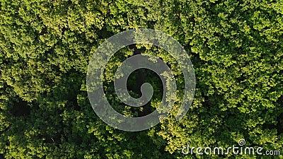 Flyg- sikt över sommarskog i morgon stock video