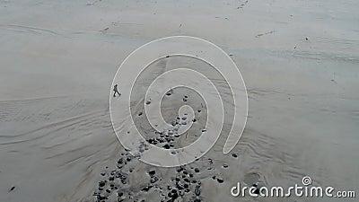 Flyg- sikt av damen som går på den berömda Magheraroarty stranden - Machaire Rabhartaigh - på den lösa atlantiska vägen in lager videofilmer