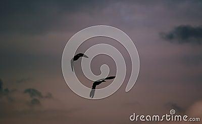 Flyga för änder