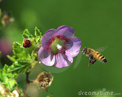 Flying bee and flower