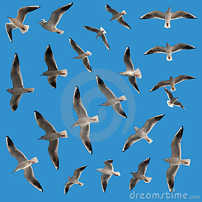 Free Flying Birds Royalty Free Stock Image - 22244416