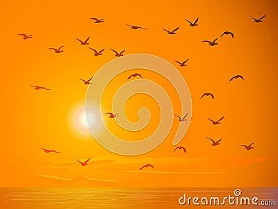 Flying birds against orange sunset.