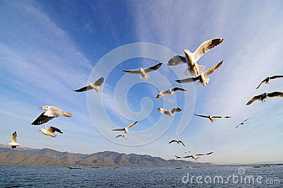 Flying birds in blue sky