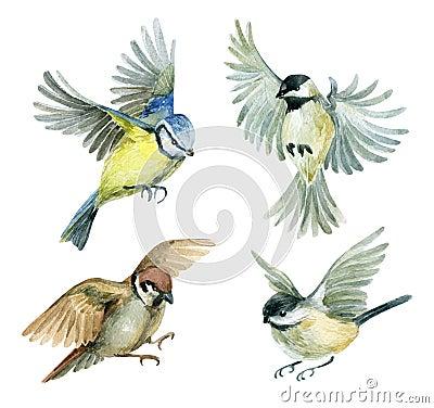 Free Flying Birds Set Stock Photography - 61006112