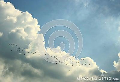 Flying birds in skies