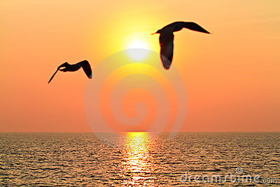 Flying birds with sunset
