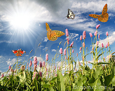 Flying butterflies in the flower meadow