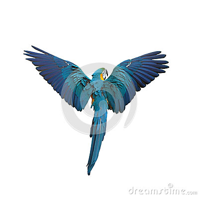 Free Flying Colorful Plumage Parrot Isolated On White Stock Photography - 25287382