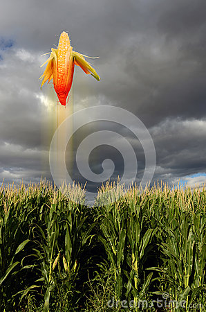 Flying corn in field