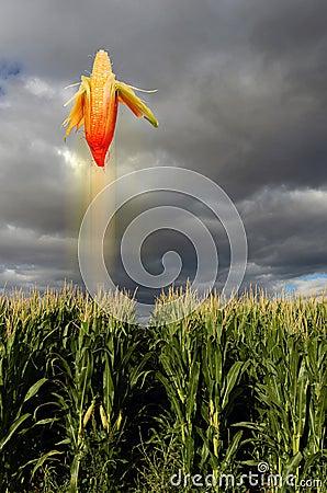 Flying corn in field