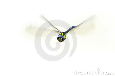 Flying damsel-fly