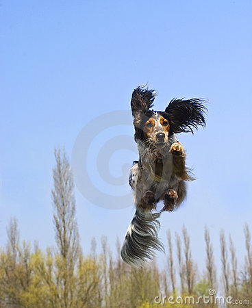 A flying dog!