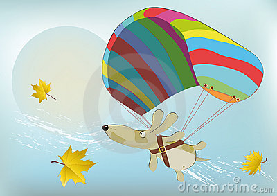 Flying dog with the parachute