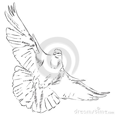 flying dove pencil drawing - photo #28