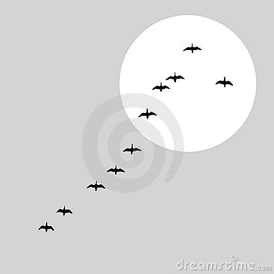 Flying ducks silhouette