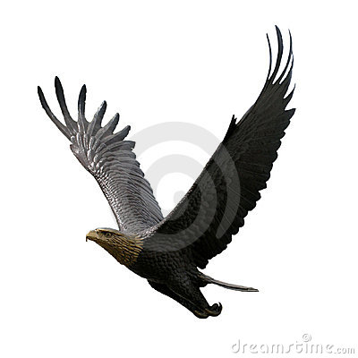 Free Flying Eagle Royalty Free Stock Images - 1079259