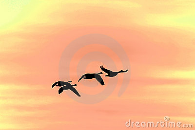 Flying geese silhouette