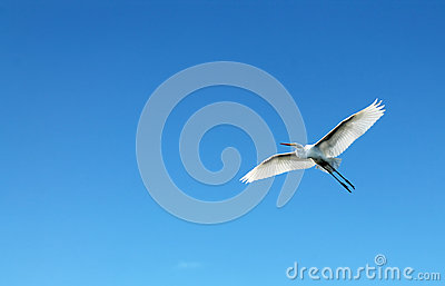 Beautiful white bird flying - photo#28