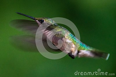 Colorful hummingbirds flying - photo#44