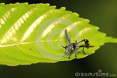 Flying insect on leaf 4