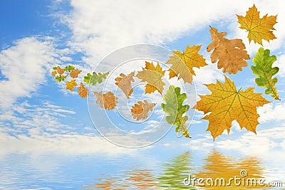 Flying multi-coloured leaves
