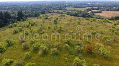 Flying over the field and forest, aerial view stock video footage