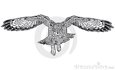 Flying owl drawings black and white - photo#18