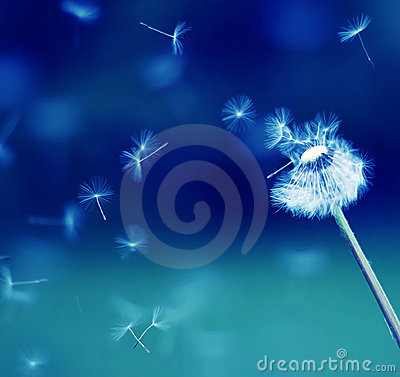 Free Flying Parachutes From Dandelion Stock Photos - 10501353