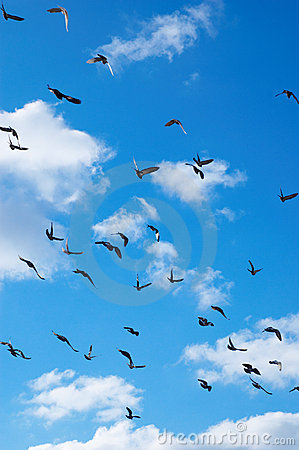 Free Flying Pigeons Royalty Free Stock Photos - 1723688