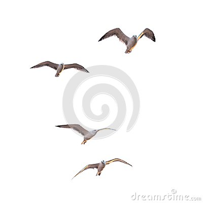 Free Flying Seagulls Royalty Free Stock Photos - 102384368