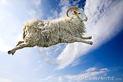 Flying Sheep