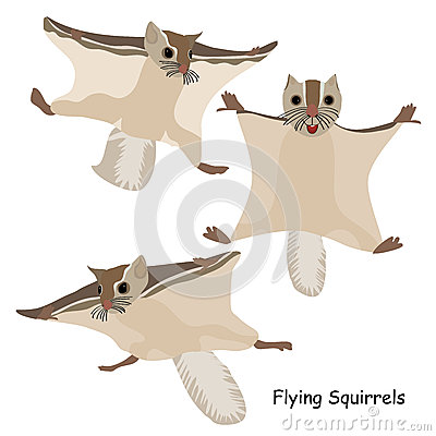 Free Flying Squirrels Set Royalty Free Stock Photos - 49702068