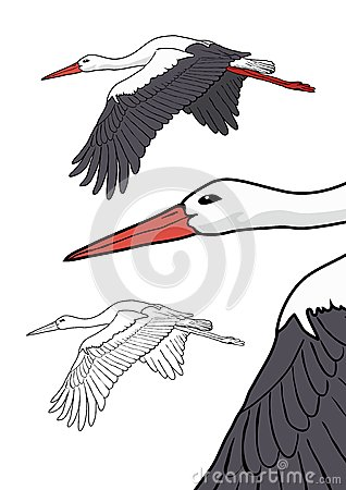 Flying stork, vector illustration