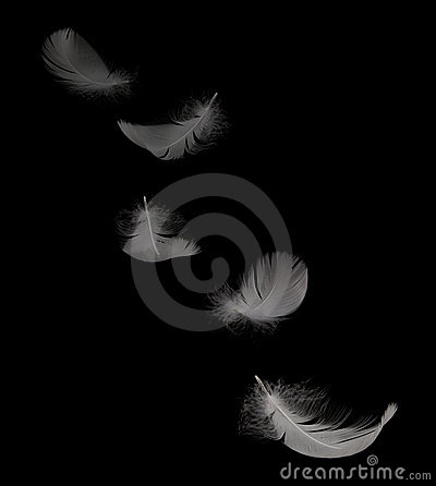 Free Flying Swan Feather Royalty Free Stock Photo - 11726515