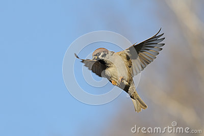 Flying sparrow animated - photo#22