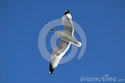 Flying under the blue sky