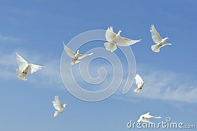 Flying white doves