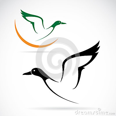 Free Flying Wild Duck Stock Photography - 36360432