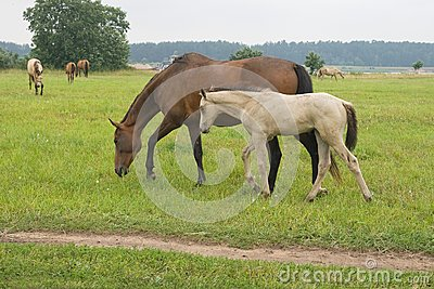 Foal το άλογό της