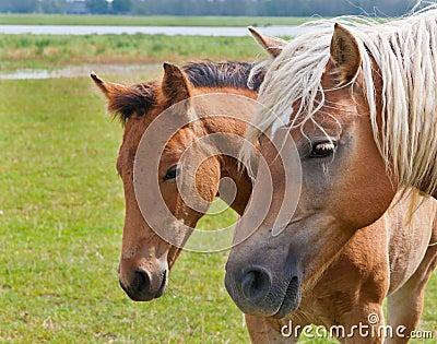 διπλό foal το πορτρέτο φοράδων