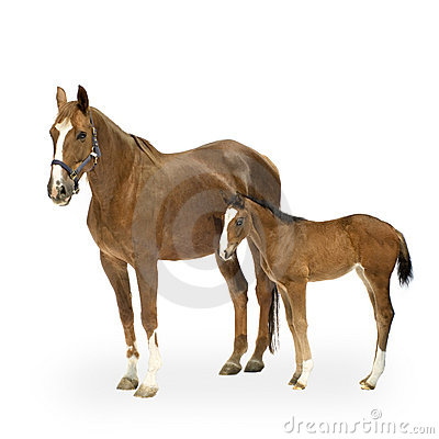 Free Foal Royalty Free Stock Photos - 2525058