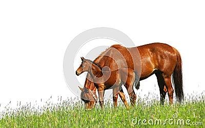 Foal φοράδα