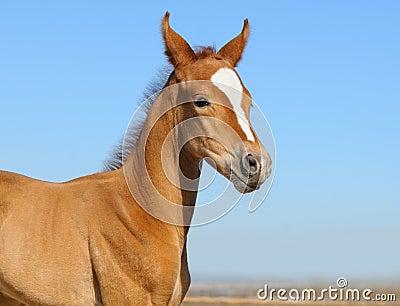 Foal 5 ημερών νεογέννητο