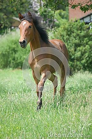 Free Foal Stock Photo - 5366500