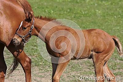 Foal 7
