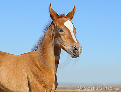 Foal appena nato - soltanto 5 giorni