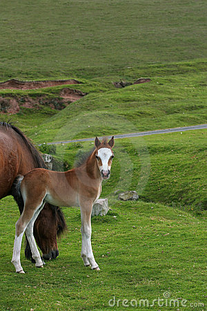 Foal Beauty