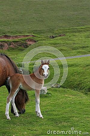 Foal Beauty